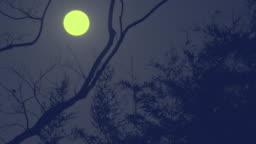 Full moon rising in clear winter sky