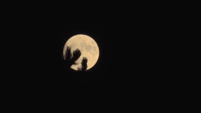 tl/ full moon rising - supermoon stock videos & royalty-free footage