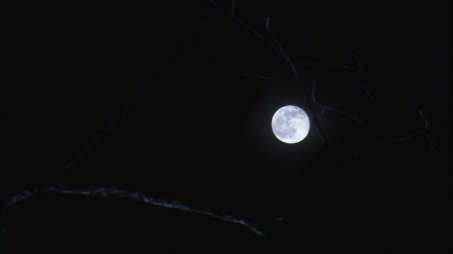 A full moon shines on tree branches.