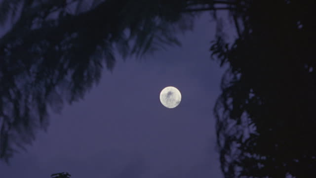 A full moon shines through gently swaying tree branches.