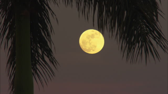 cu, full moon under palm leaves, pinar del rio, cuba - full moon stock videos & royalty-free footage