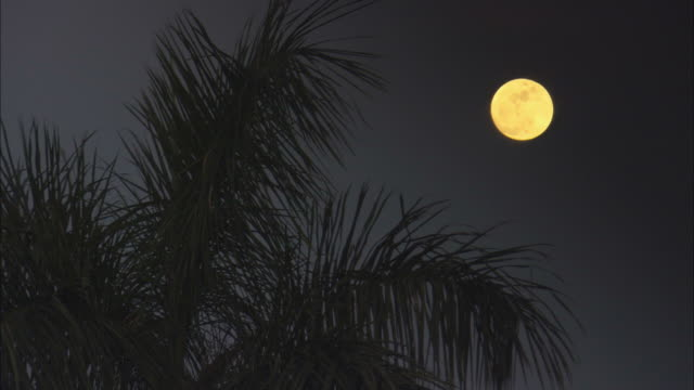 ms, full moon under palm leaves, pinar del rio, cuba - full moon stock videos & royalty-free footage