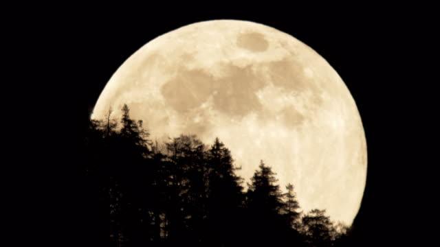 full moon - moon stock videos & royalty-free footage