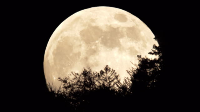 full moon - night stock videos & royalty-free footage