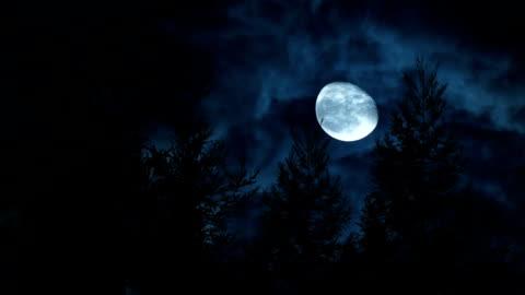 vidéos et rushes de pleine lune avec pin - lune