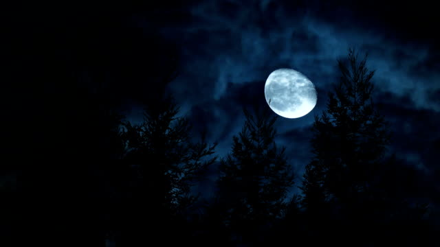 full moon with pine tree - forest stock videos & royalty-free footage