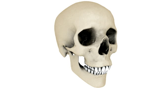 A full rotation in an anti-clockwise motion of the skull.