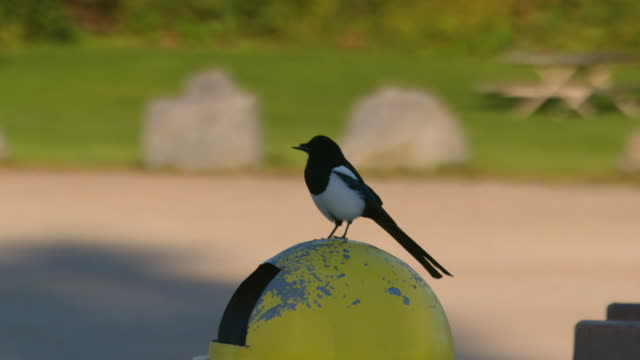 Full shot of a bird resting on a dustbin