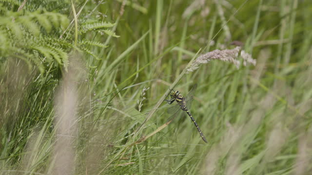 full shot of a dragonfly in the tall grass - animal eye stock videos & royalty-free footage