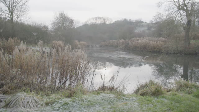 full shot of a pond in wharram percy - reed grass family stock videos & royalty-free footage