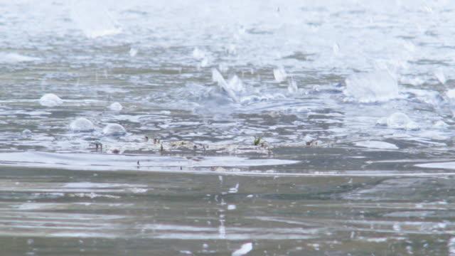 vídeos y material grabado en eventos de stock de full shot of an otter breaking the frozen surface of the river - nutria de río