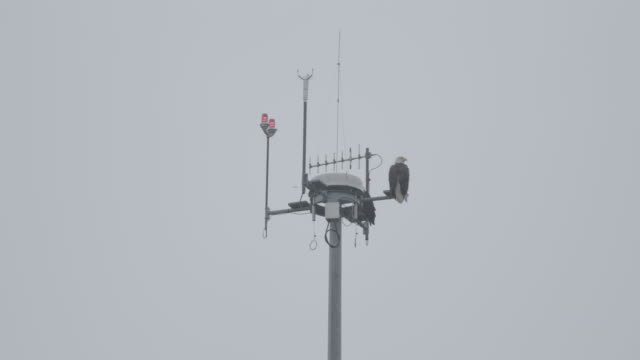full shot of bald eagles perching on a weather station - wetterstation stock-videos und b-roll-filmmaterial