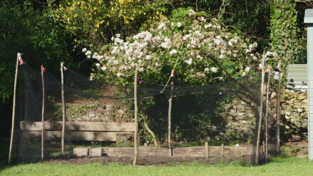 stockvideo's en b-roll-footage met full shot of bare vegetable patch in garden. - bare tree