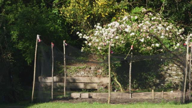 vídeos y material grabado en eventos de stock de full shot of bare vegetable patch in garden. - bare tree