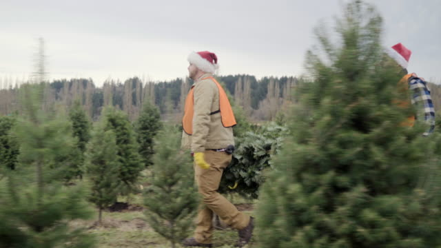full shot of staff carrying a tree at a pine tree farm - pacific northwest usa stock videos & royalty-free footage