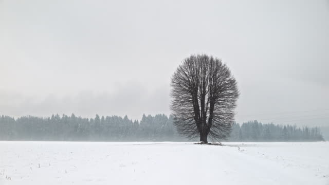 fully loop-able: single tall tree in the meadow in winter, fall and spring - slovenia meadow stock videos & royalty-free footage