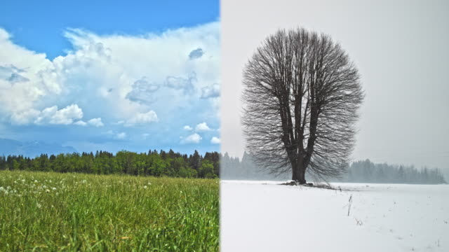 fully loop-able: tall tree in the meadow in four seasons - le quattro stagioni video stock e b–roll