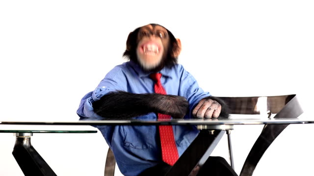 fun monkey - primate stock videos and b-roll footage