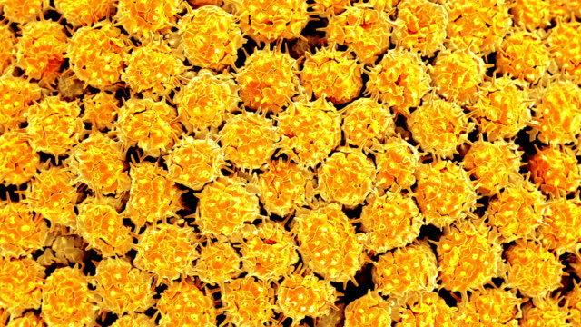 vídeos de stock, filmes e b-roll de fungal cells, sem - micrografia