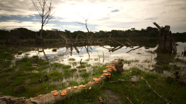 Fungi sprout from fallen tree, clouds pass overhead reflected in floodwaters.