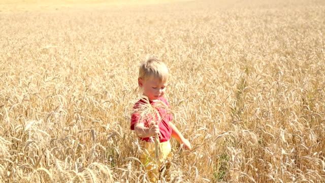 stockvideo's en b-roll-footage met funny boy in wheat - volkorentarwe
