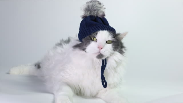funny cat in winter hat - yawning stock videos & royalty-free footage