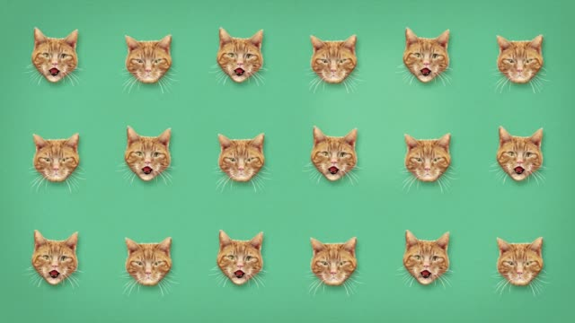 funny cat miaow grid pattern for background and text - digital animation stock videos & royalty-free footage