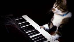 Funny Cat Plays a Keyboard, Organ or Piano
