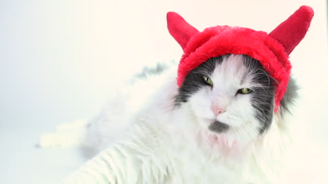 funny cat wearing devil horns costume - pet clothing stock videos & royalty-free footage