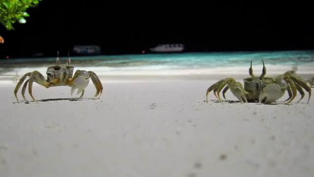 Funny Crabs Race