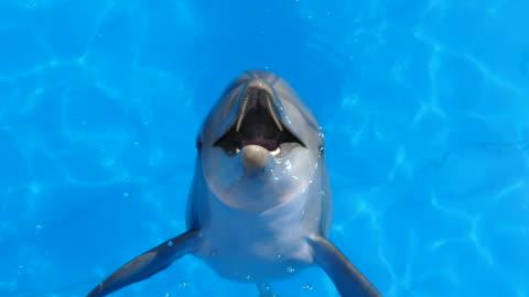 stockvideo's en b-roll-footage met grappige dolfijn springt uit water - dolfijn