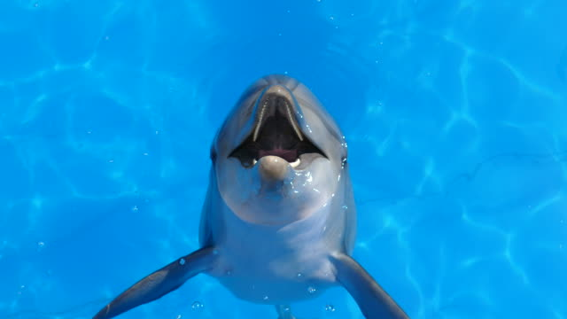 funny dolphin jumps out of water - dolphin stock videos & royalty-free footage