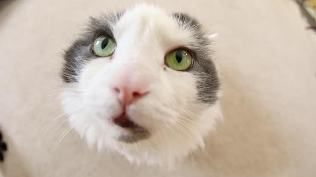 vídeos de stock, filmes e b-roll de funny fisheye kitty face video - olhos verdes