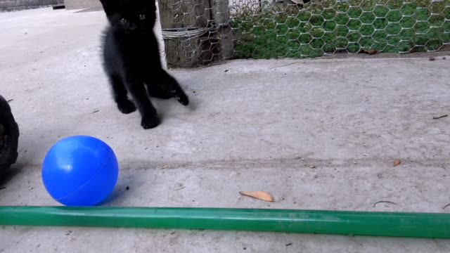 Funny kitten playing with ball outdoors