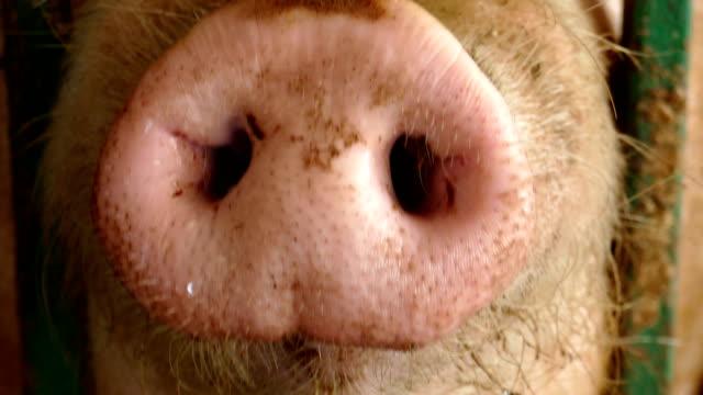 rolig nasse - gris bildbanksvideor och videomaterial från bakom kulisserna