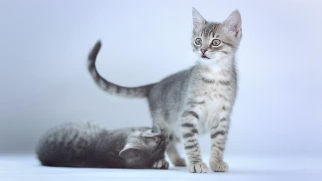 HD: Lustige verspielte Kätzchen