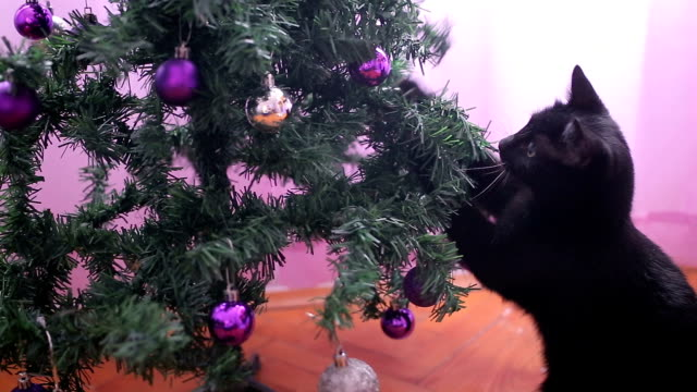 funny small black cat playing with christmas tree - destruction stock videos & royalty-free footage