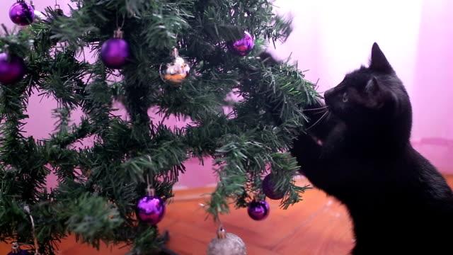 vídeos y material grabado en eventos de stock de divertido pequeño gato negro jugando con el árbol de navidad - destrucción