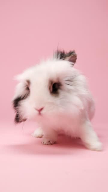lustige weiße hase mit braunen ohren sitzen auf rosa hintergrund. - happy easter stock-videos und b-roll-filmmaterial