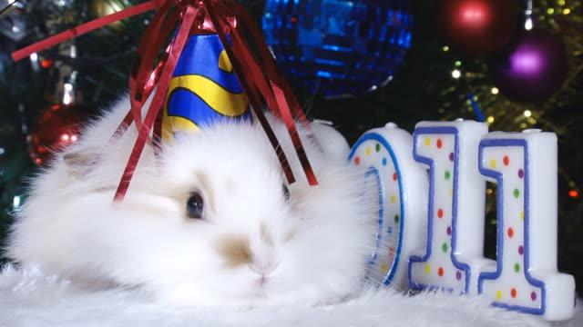 vídeos de stock, filmes e b-roll de engraçado coelho branco e o novo ano - pet clothing