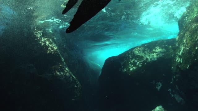 vidéos et rushes de fur seal - otarie à fourrure