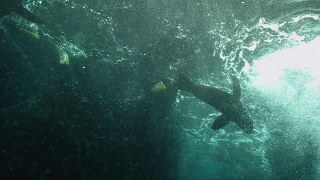 vídeos y material grabado en eventos de stock de fur seal - escafandra autónoma