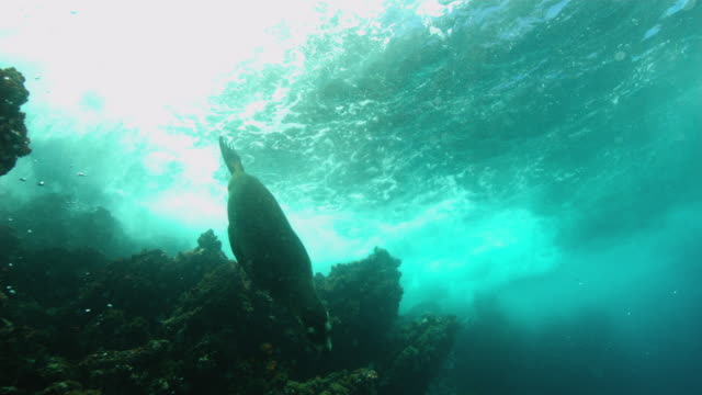 fur seal - 遅い点の映像素材/bロール