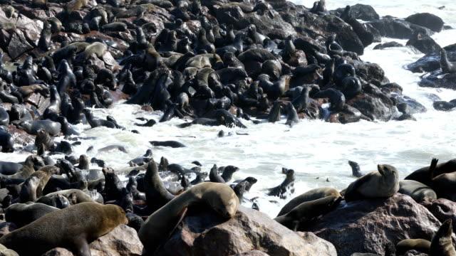 Fur Seals Colony - Cape Cross