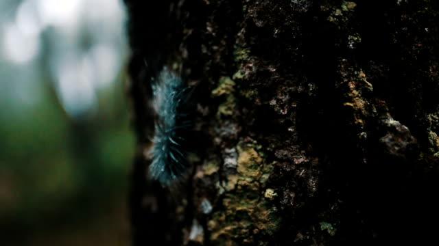 Furry Worm,Furry Caterpillar
