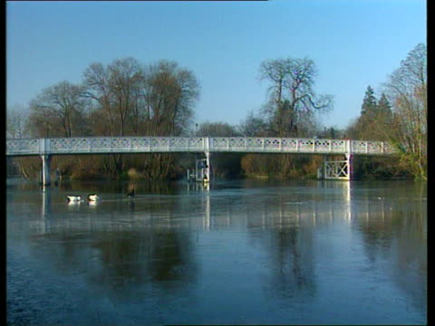 further snow prompts calls for restructure of government cold weather payments england berkshire pangbourne frozen river thames birds on ice preening - preening animal behavior stock videos & royalty-free footage