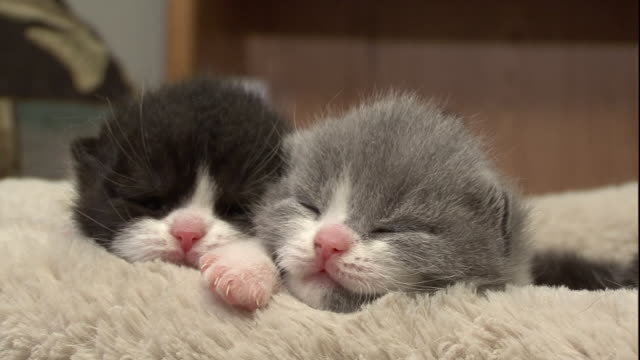 Fuzzy kittens sleep close together in a pillow bed.