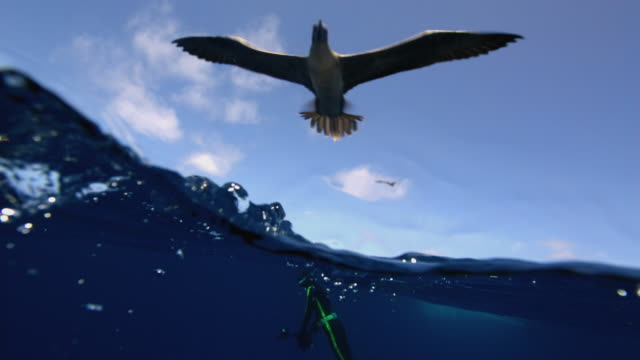 g_divers - galapagos islands stock videos & royalty-free footage