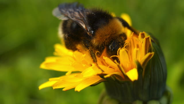 gadfly - wildlife stock videos & royalty-free footage