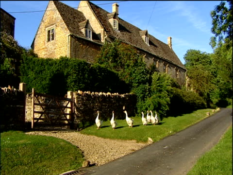 vídeos y material grabado en eventos de stock de gaggle of geese waddle along picturesque country road towards gate cotswolds - cotswolds